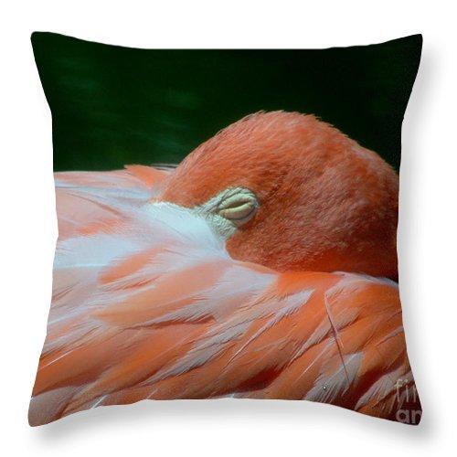 Bird Throw Pillow featuring the photograph Pink 1 C by Mark Grayden