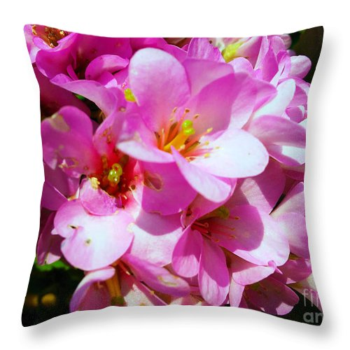 Bergenia Cordifolia Throw Pillow featuring the photograph Pink And Beauty by Jasna Dragun