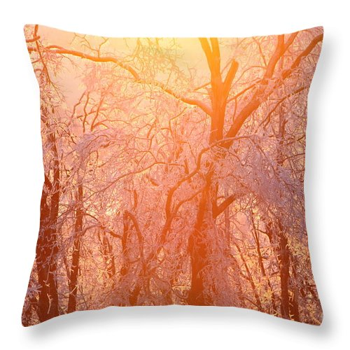 Pink Throw Pillow featuring the photograph Pink And Gold by Nadine Rippelmeyer