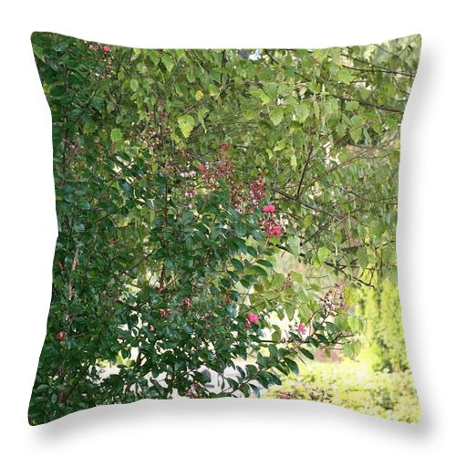 Path Throw Pillow featuring the photograph Pink And Green Path by Nadine Rippelmeyer