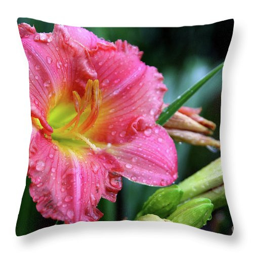 Arrangement Throw Pillow featuring the photograph Pink And Yellow Lily After Rain by Alan Look