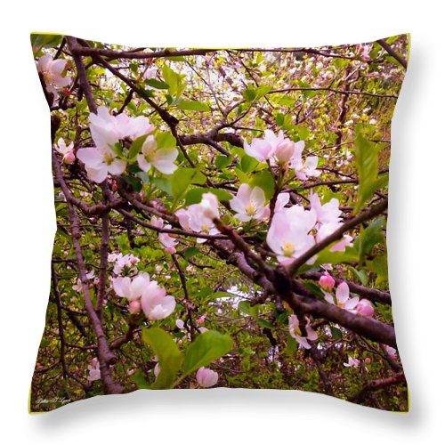 Apple Throw Pillow featuring the mixed media Pink Aplle Blossoms Of Spring Time by Debra Lynch