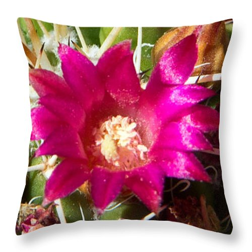 Pink Flowers Throw Pillow featuring the photograph Pink Barrel Cactus Flowers by Kelly Holm