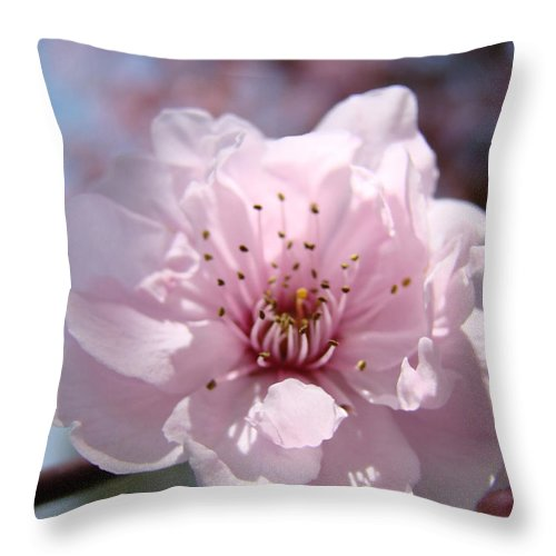 �blossoms Artwork� Throw Pillow featuring the photograph Pink Blossom Nature Art Prints 34 Tree Blossoms Spring Nature Art by Baslee Troutman