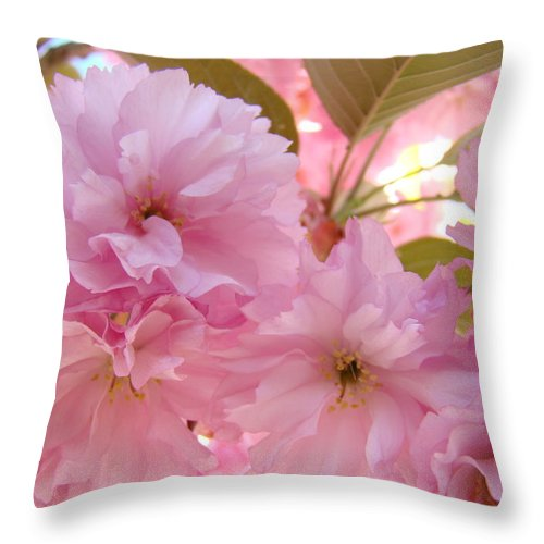 Blossom Throw Pillow featuring the photograph Pink Blossoms Art Prints Spring Tree Blossoms Baslee Troutman by Baslee Troutman