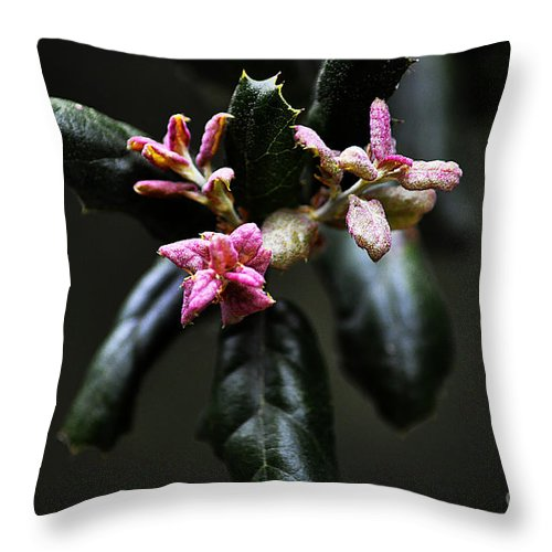 Clay Throw Pillow featuring the photograph Pink Bud by Clayton Bruster