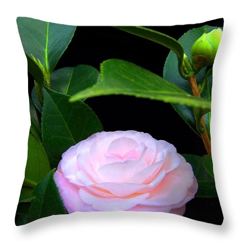 Camelia Throw Pillow featuring the photograph Pink Camelia by Laurie Paci