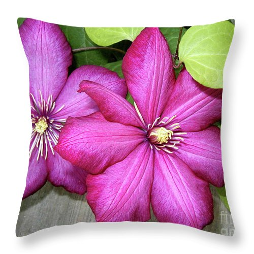 Clematis Throw Pillow featuring the photograph Pink Clematis Climber by Laura Brightwood