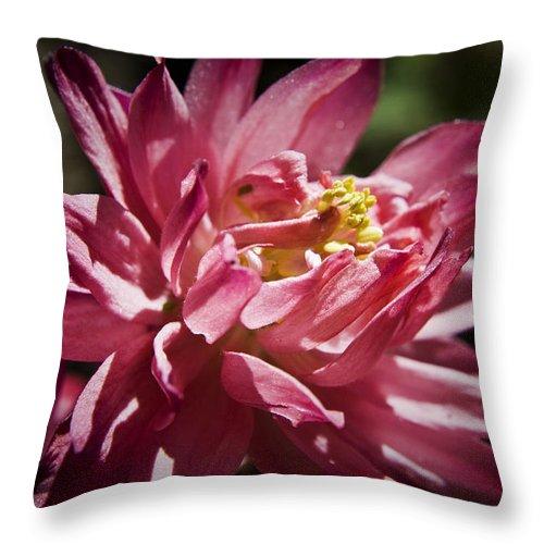 Columbine Throw Pillow featuring the photograph Pink Columbine by Teresa Mucha