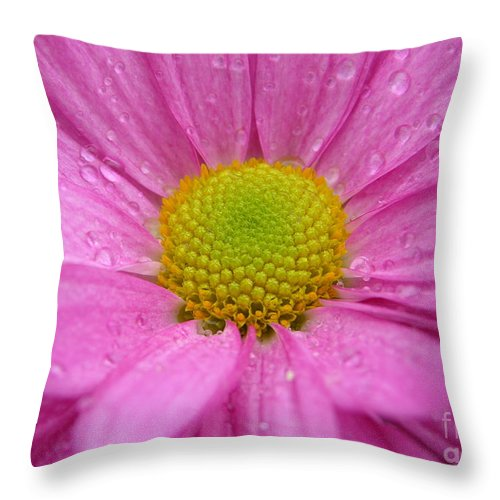 Pink Daisy Throw Pillow featuring the photograph Pink Daisy With Raindrops by Carol Groenen