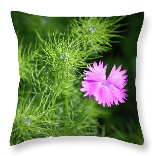 Dianthus Throw Pillow featuring the photograph Pink Dianthus With Nigella Buds by Teresa Mucha