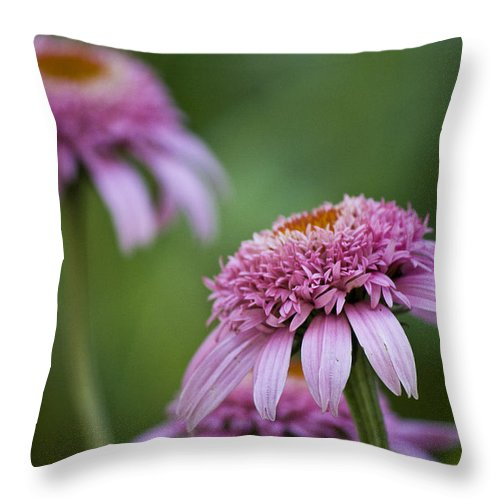 Pink Throw Pillow featuring the photograph Pink Double Delight by Teresa Mucha