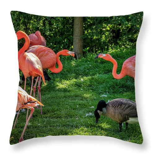 Steve Harrington Throw Pillow featuring the photograph Pink Flamingos And Imposters by Steve Harrington