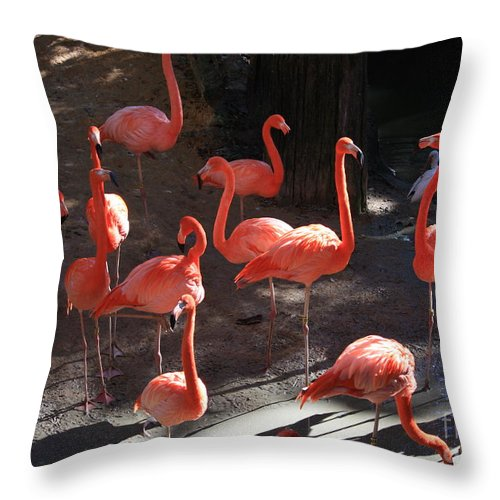 Pink Flamingos Throw Pillow featuring the greeting card Pink Flamingos by Carol Groenen