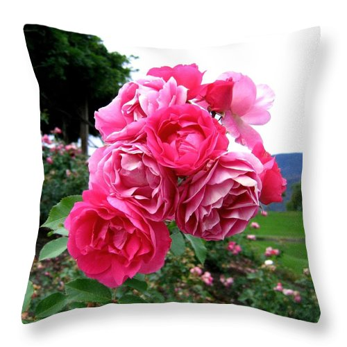 Roses Throw Pillow featuring the photograph Pink Floribunda Roses by Will Borden
