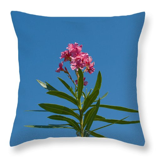 Florida; Indian; River; Melbourne; Nerium; Oleander; Red; Pink; Flower; Bush; Shrub; Poison; Poisono Throw Pillow featuring the photograph Pink Florida Oleander Blossom by Allan Hughes