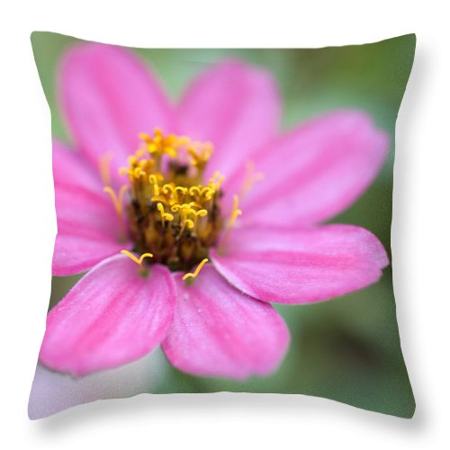 Pink Throw Pillow featuring the photograph Pink Flower by Jessica Wakefield