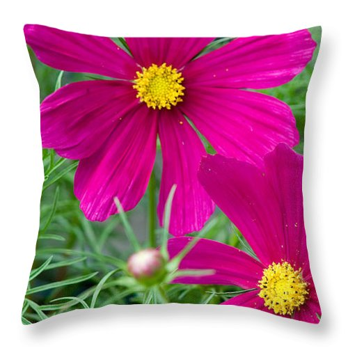Pink Throw Pillow featuring the photograph Pink Flower by Michael Bessler
