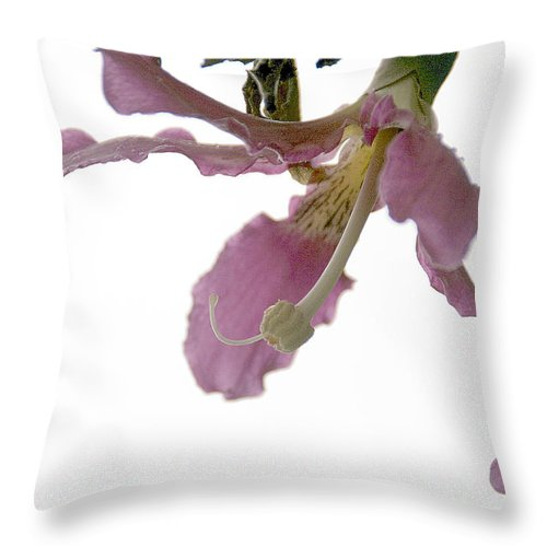 Flower Throw Pillow featuring the photograph Pink Flower by Vladi Alon