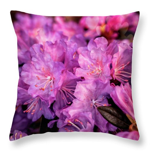 Flowers Throw Pillow featuring the photograph Pink From Heart by Lilia D