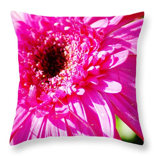 Pink Throw Pillow featuring the photograph Pink Gerber by Donna Bentley