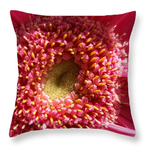 Pink Throw Pillow featuring the photograph Pink Gerbera Daisy by Amy Fose