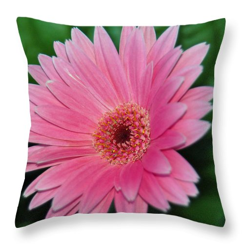 Pink Gerbera Throw Pillow featuring the photograph Pink Gerbera Delight by Suzanne Gaff