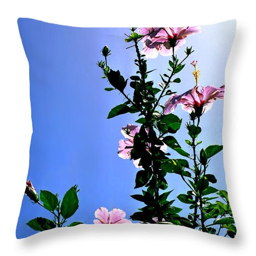 Hibiscus Hawaii Pink Backlit Green Foliage Leaves Tropical Flower Print Blue Sky Bright Midday Sun Throw Pillow featuring the photograph Pink Hibiscus by Kevin Smith