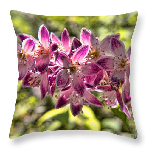 Biltmore Throw Pillow featuring the photograph Pink Ladies In Spring Glory by Brenda Kean