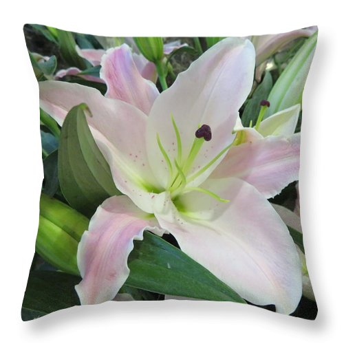Pink Lily Throw Pillow featuring the photograph Pink Lily by Cindy Kellogg