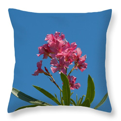 Florida; Indian; River; Melbourne; Nerium; Oleander; Red; Pink; Flower; Bush; Shrub; Poison; Poisono Throw Pillow featuring the photograph Pink Oleander Flower In Spring by Allan Hughes