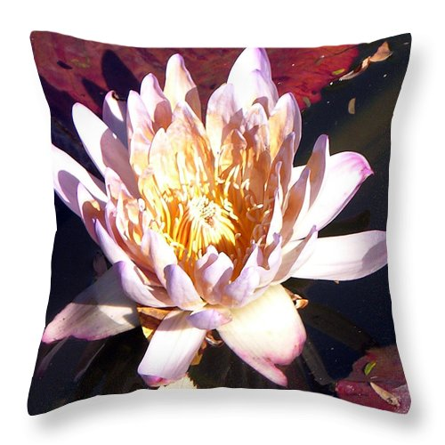 Water Lily Throw Pillow featuring the photograph Pink On Gold by John Lautermilch