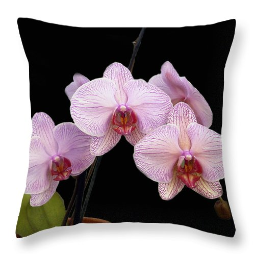 Flowers Throw Pillow featuring the photograph Pink Orchids by Kurt Van Wagner