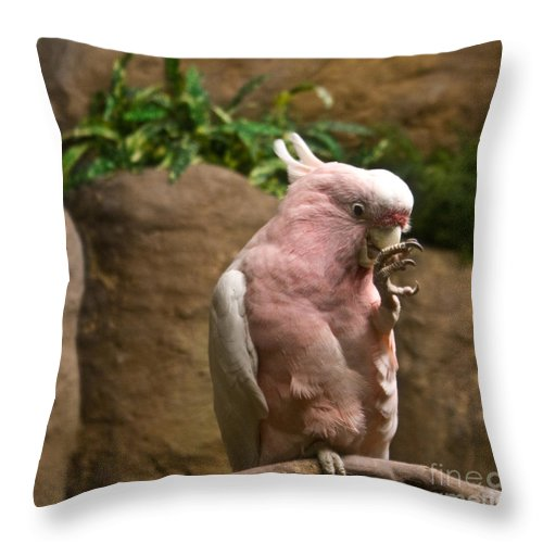 Pink Throw Pillow featuring the photograph Pink Parrot Nibbling Foot 2 by Douglas Barnett