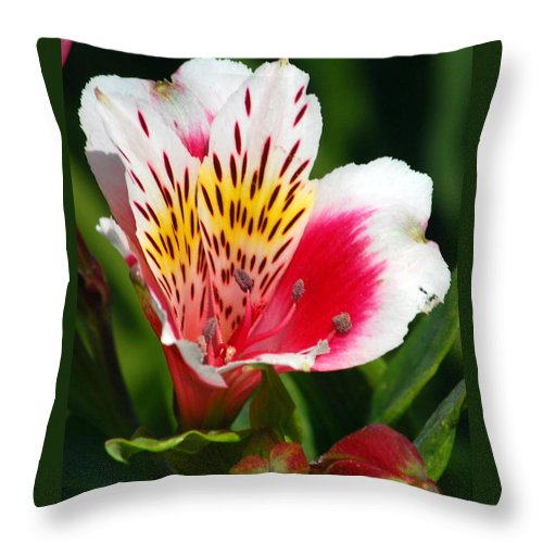 Peruvian Throw Pillow featuring the photograph Pink Peruvian Lily 1 by Amy Fose