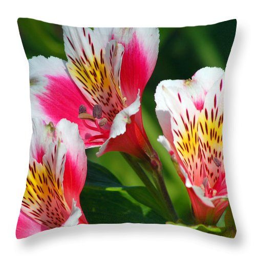 Peruvian Throw Pillow featuring the photograph Pink Peruvian Lily 2 by Amy Fose