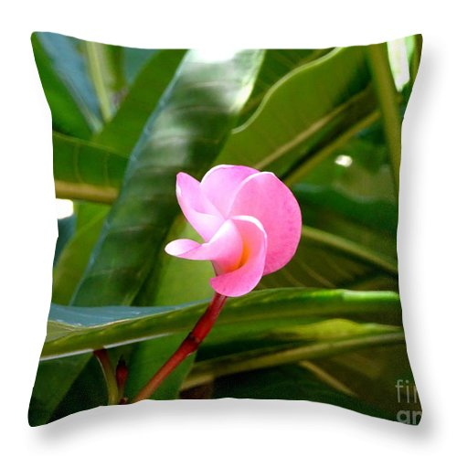 Pink Throw Pillow featuring the photograph Pink Plumeria In Bloom by Camryn Zee Photography