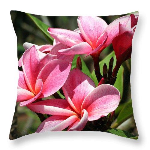 Flower Throw Pillow featuring the photograph Pink Plumeria by Teresa Zieba