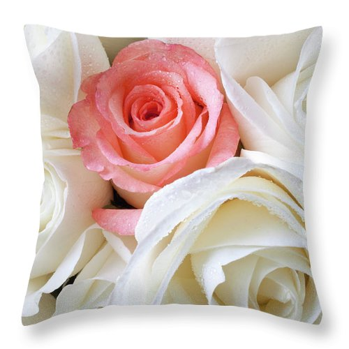 Pink Rose White Roses Throw Pillow featuring the photograph Pink Rose Among White Roses by Garry Gay