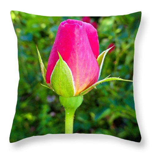 Pink Throw Pillow featuring the photograph Pink Rose Bud by Robert Meyers-Lussier