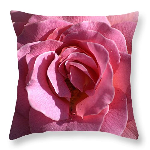 Clay Throw Pillow featuring the photograph Pink Rose by Clayton Bruster