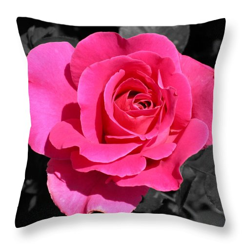 Pink Throw Pillow featuring the photograph Perfect Pink Rose by Michael Bessler