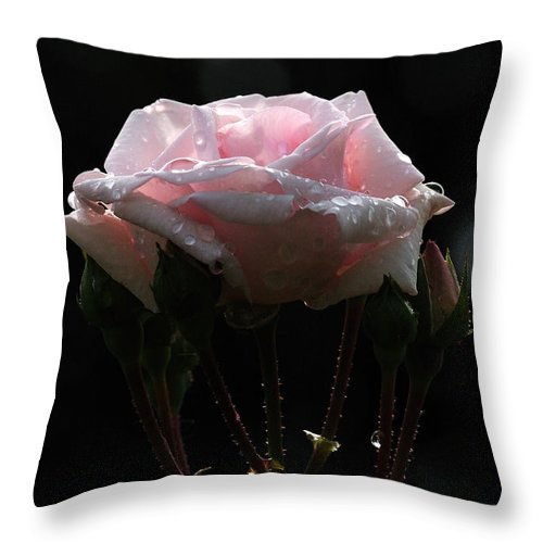 Rose Throw Pillow featuring the photograph Pink Rose Silhouette 2 by Edward Sobuta