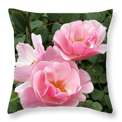 Roses Throw Pillow featuring the photograph Pink Roses 1 by Amy Fose