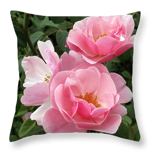 Pink Roses Throw Pillow featuring the photograph Pink Roses 2 by Amy Fose
