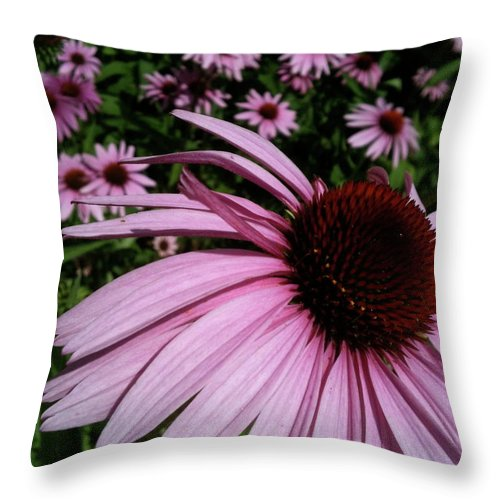 Throw Pillow featuring the photograph Pink Sweetie by Trish Hale