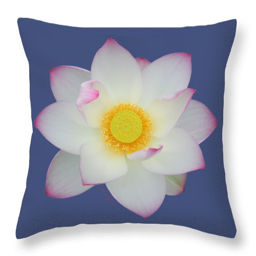 Pink Tipped White Lotus Transparent Background Throw Pillow For Sale By Layla Alexander