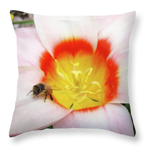 Tulip Throw Pillow featuring the photograph Pink Tulip Flower Orange Art Prints Honey Bee Baslee Troutman by Baslee Troutman