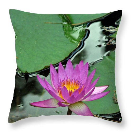 Amphibian Throw Pillow featuring the photograph Pink Water Lily by Judy Vincent