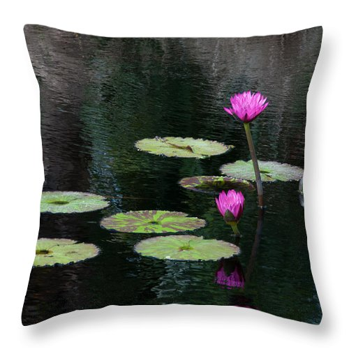 Pink Magenta Flower Water Lily Throw Pillow featuring the photograph Pink Waterlillies by Carolyn Dalessandro